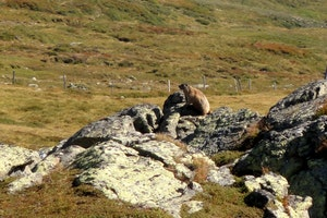 "4 Nächte Bike ->> ""Manggei-Jagd"" (Murmeltiere) im Nationalpark"