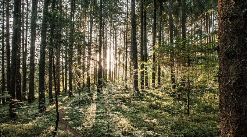 Waldzimmer